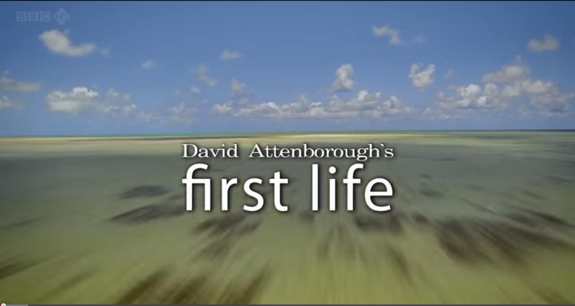 prima forma de viata documentar online