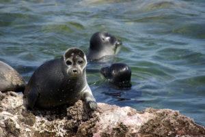 Specie de foci specifice doar lacului Baikal
