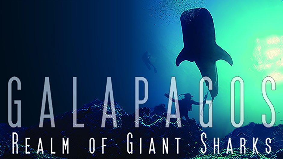 galapagos taramul rechinilor balena