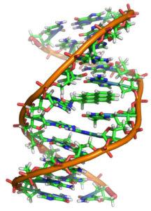 hibridizarea-ADN-ului