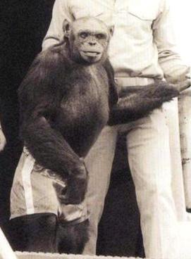 cimpanzeul Oliver