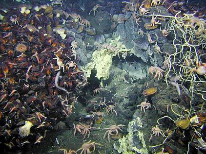 Viata subacvatica
